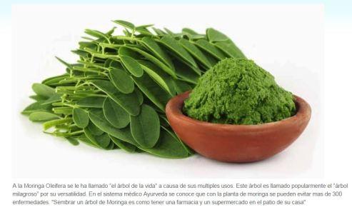 Nutricionales Moringa